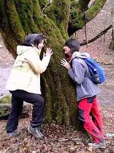 La copacul din poveste