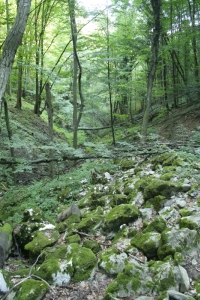 Valea Vidra
