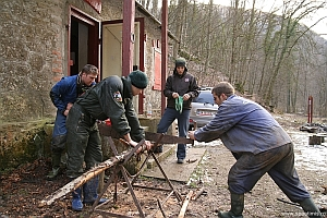 Taiat de lemne cu joagarul